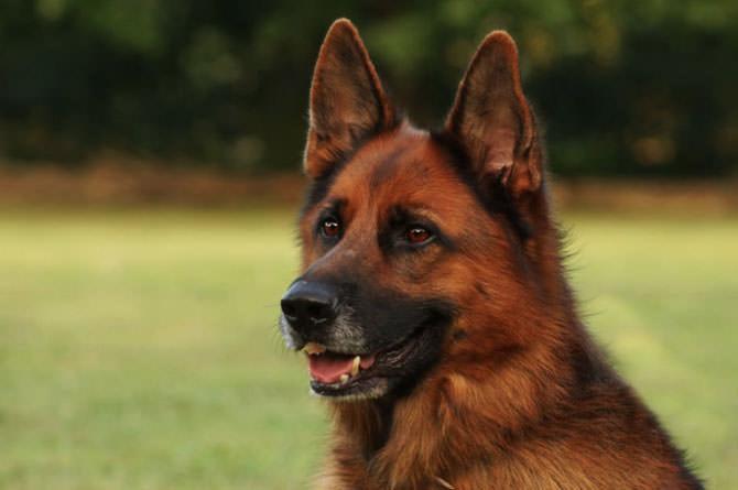 animal shelter dog seattle